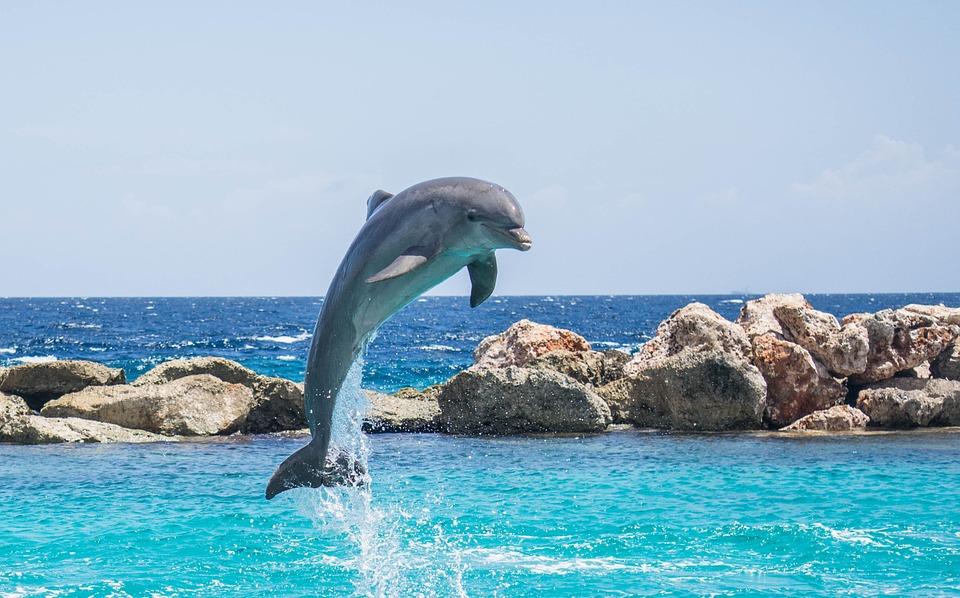 dolphin-906176_960_720.jpg