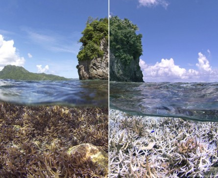 Before/After, American Samoa ©XL Catlin Seaview Survey/The Ocean Agency/Richard-Vevers