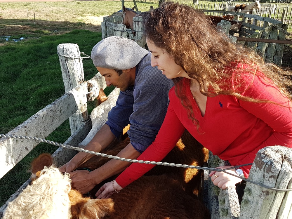 ChipSafer cattle INKLINE.jpg