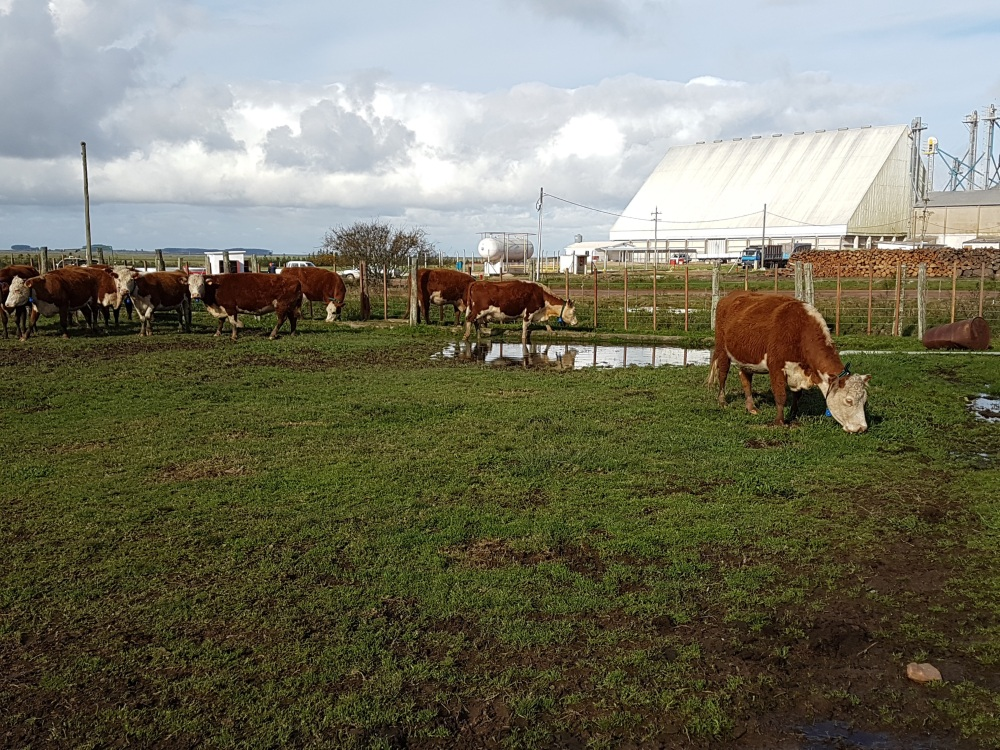 ChipSafer technology INKLINE